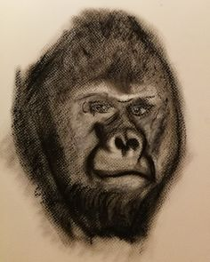 #pastel #oilpastel #animaldrawing #gorilla #ape #art
