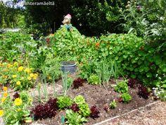 Versoja Vaahteramäeltä: Inspiraatiota hyötyviljelyyn Christhcurch Botanic Garden, New Zealand