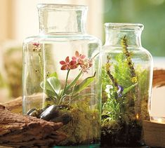 We're loving the little flowers in this terrarium.