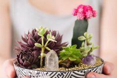 O guia da suculenta: conheça as espécies e como cultivá-las | CASA.COM.BR