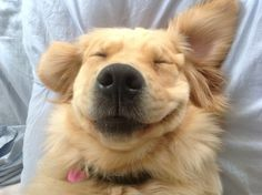 Scientists Discover Happiest Puppy