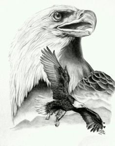proud by traditional art drawings animals 2007 2013 . - proud by traditional art drawings animals 2007 2013 . Eagle Sketch, Bird Sketch, Animal Drawings, Pencil Drawings, Art Drawings, Drawings Of Eagles, Michael Jackson Dibujo, Tatoo Naruto, Types Of Eagles