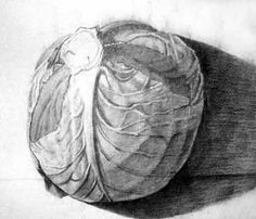 cabage pencil drawing - Google Search Still Life Photos, Still Life Art, Pencil Drawings, Cabbage, Image, Google Search, Cabbages, Collard Greens, Pencil Art