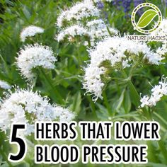 5 Herbs That Lower Blood Pressure herbsandoilshub. This post share 5 herbs that can help with high blood pressure. Natural Health Remedies, Natural Cures, Natural Healing, Herbal Remedies, Holistic Remedies, Holistic Healing, Natural Treatments, Healing Herbs, Medicinal Plants