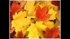 Fall is Coming!-Collecting leaves is a fun fall activity for your kids and can be beneficial for learning and developmental skills. From Embrace Your Chaos. Pinned by SOS Inc. Timothy Green, Fall Is Coming, Happy Fall Y'all, Autumn Activities, Travel And Tourism, Autumn Home, Fall Crafts, Thanksgiving Crafts, Kid Crafts