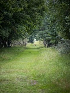 Nationaal park De Hoge Veulwe, Sony Nex-5 18-55mm