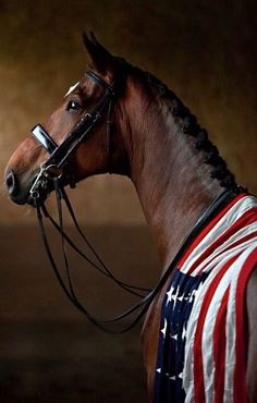 Happy 4th of July fellow equestrians!