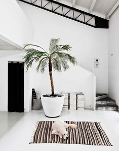 Interior | Inspiration | Palmtree | Dog | White space | More on Fashionchick.nl