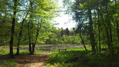 Een van de plekken waar wij graag wandelen is het Mensingebos in Roden. Dit is een prachtige rustige plek in dat bos. We hebben een website met gratis wandelroutes in onze regio (http://wandelenrondroden.nl/), o.a. langs deze plek, maar nog veel meer.