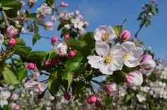 Blossem made by Astrid Vermeulen