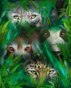 Jungle Eyes - Asia, featuring leopard and panda eyes looking through jungle leaves, by Carol Cavalaris.