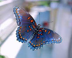 mariposas monarcas - Buscar con Google