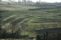 Medieval Ridge and Furrow above Wood Stanway - geograph.org.uk - 640050 - Open field system - Wikipedia, the free encyclopedia
