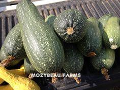 http://www.ebay.com/itm/1-Ounce-GREY-ZUCCHINI-SEEDS-Premium-USA-Seeds-Heirloom-Non-GMO-/311014390577?pt=LH_DefaultDomain_0