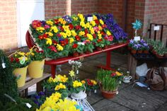 Flowers for sale at the Thurrock Volunteer Group coffee morning. Find out more at www.facebook.com/thurrockbcc or on twitter @thurrockbcc #fundraising #flowers #spring