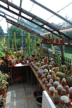 Greenhouse full of cacti at Henry Moore's house. Wish they'd allowed cameras inside too!