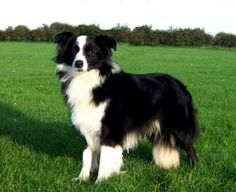 """Our Border Collie's name was """"Friday"""" because we adopted him on Good Friday. He was the greatest dog, everyone loved him!"""