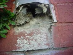 In some ways, dryer vents can be like old barns — you forget about them until they crumble. Home Safes, Home Inspection, Old Barns, Dryer, Cleaning Hacks, Birds, Mice, Safety, Forget