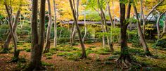 Japanesegardens_featured2-1200x515