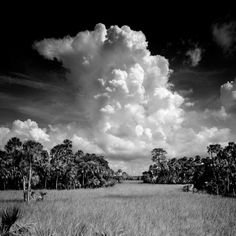 Wetlands Collection Archives - Clyde Butcher | Black & White Fine Art Photography