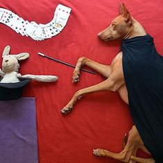 Rufus, The Adorable Sleeping Pup, Photo Series Will Make Your Day. (Sara Rehnmark website, Raisingtheruf.com.)