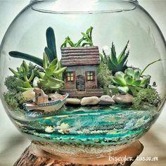 nature cactus and succulent li terrarium design that will bring nature to your .