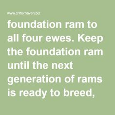foundation ram to all four ewes. Keep the foundation ram until the next generation of rams is ready to breed, then cull him (sell, butcher, or transfer to a different breeding program). Keep all of the lambs for the third breeding cycle.  Second breeding cycle: Do the same thing you did with the first breeding cycle because your foundation ram is still the only ram old enough to be reliably fertile. Keep all of the lambs for the fourth breeding cycle.