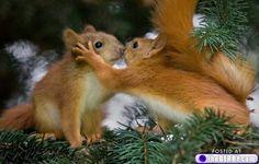 kissing squirells