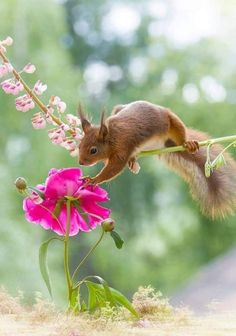 Daughter of the King: Archive about mammals Squirrel Pictures, Animal Pictures, Cute Pictures, Beautiful Pictures, Nature Animals, Animals And Pets, Funny Animals, Beautiful Birds, Animals Beautiful