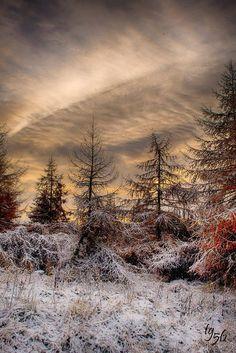 Forest beside Loch Glow, Scotland