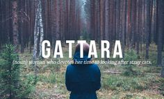 Gattara | 16 Luscious Italian Words And Phrases You Need In Your Life