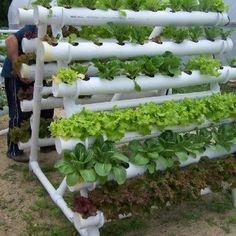 Diy pvc pipe garden projects how to build small pipe vertical vegetable garden how to how . Vertical Vegetable Gardens, Vertical Garden Diy, Hydroponic Farming, Hydroponics System, Diy Hydroponics, Vertical Hydroponics, Jardim Vertical Diy, Backyard Garden Design, Backyard Ideas
