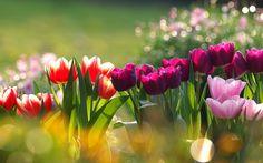flores wallpaper hd