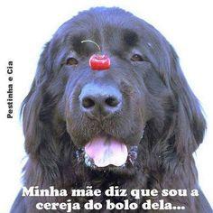 E É MESMO! ❤️❤️❤️ #cachorroétudodebom  #amoanimais  #amocachorro  #cachorro  #filhode4patas #petmeupet