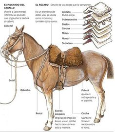 gaucho-empilchado del caballo - for long travels. Horse Saddles For Sale, Horse Saddle Shop, Horse Saddle Pads, Horse Bridle, Horse Gear, Medieval Horse, Western Saddle Pads, Horse Costumes, Draft Horses