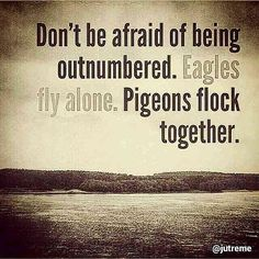 """Don't be afraid of being outnumbered. Eagles fly alone. Pigeons flock together"" #Quotes 