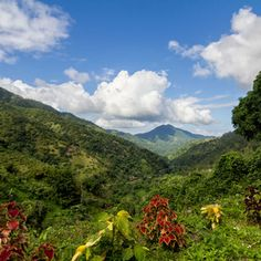 Blue Mountains of Jamaica