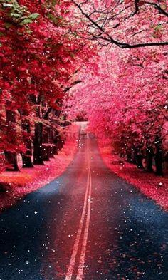 Natures True Beauty