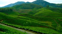 4 Nights & 5 Days Thekkady , Munnar , Alappuzha Houseboat Packages at Best Price. Visit : http://www.vnhindia.com/packages?catgid=13&duration=4
