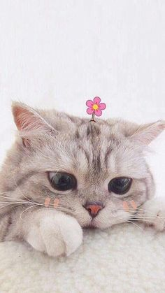 Cute Baby Cats, Cute Cats And Kittens, Cute Little Animals, Cute Funny Animals, Kittens Cutest, Cute Dogs, Funny Cats, Cats In Love, Cutest Pets