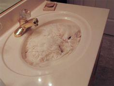 Wo ist die Katze? Ein Suchspiel in 14 Bildern