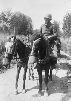 The First World War: German horse gas masks being used by transport horses. Note the absence of protection for the horses' eyes reflecting the animals' less vulnerability to the effects of gas.