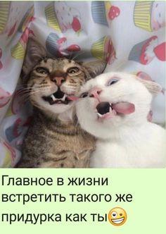 Tu fais l'idiot , je fais l'idiote ! Funny Animal Memes, Animal Quotes, Cute Funny Animals, Funny Dogs, Cute Cats, Funny Memes, Silly Cats, Grumpy Cat, Funny Animal Pictures