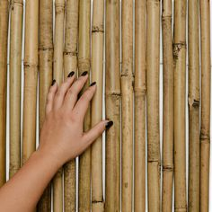 Sol Royal Bamboo Slat Privacy Screen (HxW) SolVision Premium Natural Garden Fence Screening Roll Wind and Sun Protection Bamboo Screening, Fence Screening, Balcony Privacy, Bamboo Fence, Natural Garden, Garden Trellis, Sun Protection, Wood, Nature