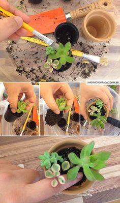 jardim_do_coracao_montagem_como_plantar_suculentas