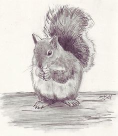 Animals pencil drawings drawn rodent drawing 5 animal sketches step by . Pencil Drawings Of Animals, Animal Sketches, Love Drawings, Beautiful Drawings, Art Sketches, Art Drawings, Drawing Animals, Squirrel Art, Pencil Drawing Tutorials