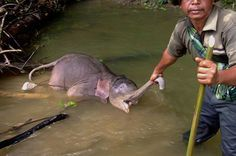 Please sign and share! Stop Elephants slaughter in Sumatra now!