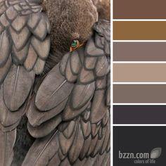 Warm Gray Colors