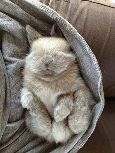 Tiny dreamer.