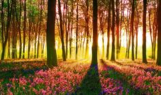 Guided Meditation - The Green Wood' (Middle Earth Meditation)